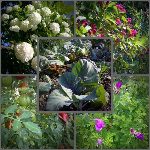 Biogarten mit EM und Triaterra im Garten Gutshaus Klaber
